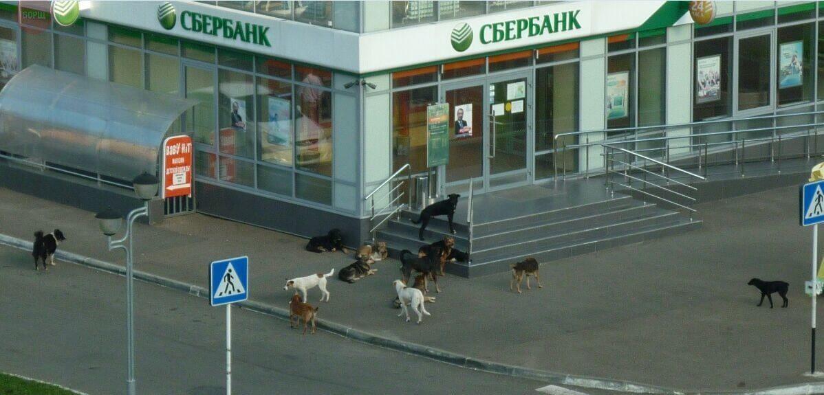 Акции для собак