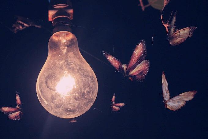 Мотыльки-новички и суперпроект-лампочка