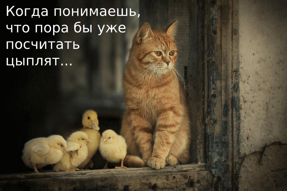 Когда понимаешь, что пора бы уже посчитать цыплят