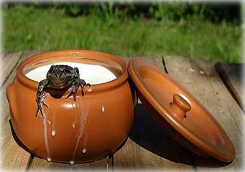 Лягушка-рабочий в хайп-молоке